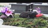 Pies spał na grobie