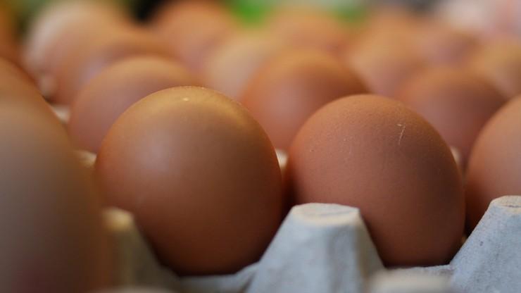 Salmonella w kurniku. GIS wycofuje partie jajek