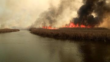 """Pożar w Biebrzańskim Parku Narodowym. """"Sytuacja jest poważna, ale opanujemy ten żywioł"""""""