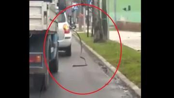 Włocławek: jeździła po mieście z wężem od dystrybutora paliwa