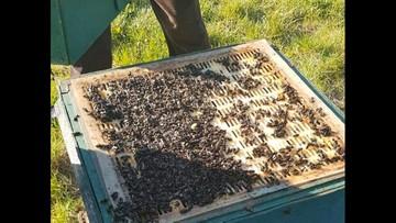 Otruł 112 kg pszczół. Sąsiedzki konflikt