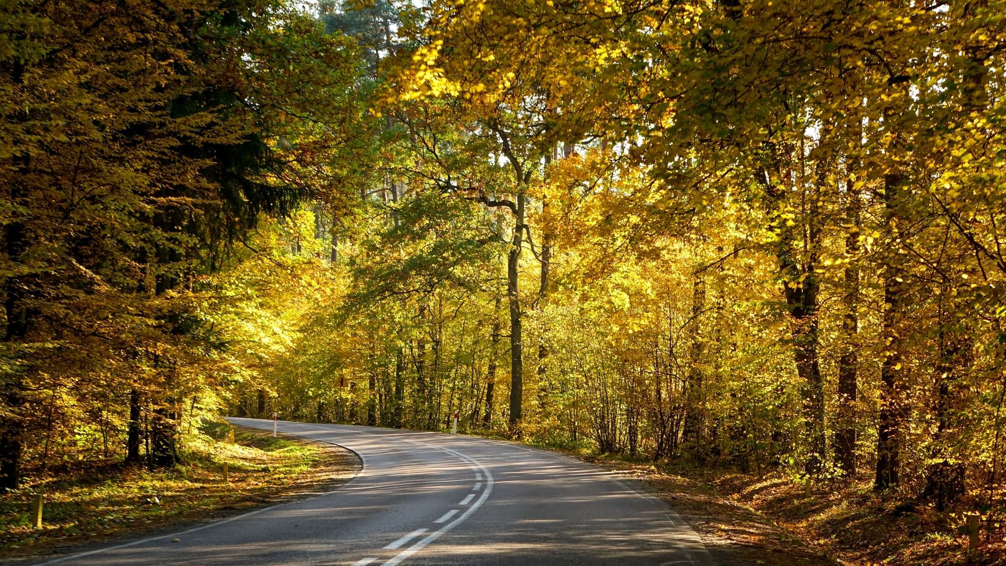 Jesień w górach, lasach i nad jeziorami - zdjęcie 3