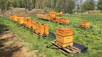 Dwa miliony martwych pszczół. Sprawę wyjaśnia policja