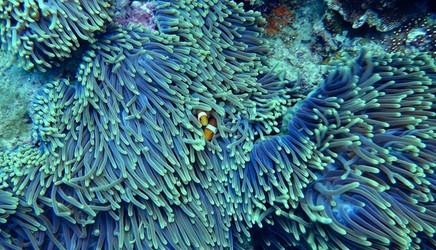 Ewolucja kierowana okazuje się dobrym sposobem na przetrwanie raf koralowych