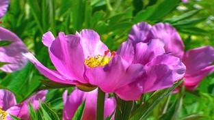 07.04.2020 00:00 Wiosna w ogrodzie