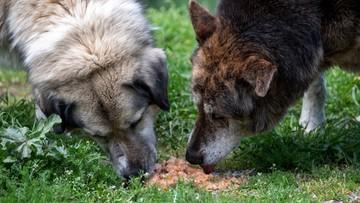 Koniec z jedzeniem psów w Chinach? Resort rolnictwa podał nowe wytyczne