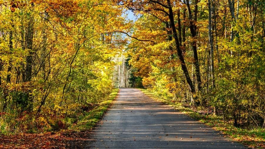 26-10-2020 09:53 Październikowy spacerek wśród polskiej przyrody. Zobacz, jak piękna jest jesień za miastem
