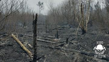 Spłonęły sarny i ptaki. Strażacy walczą z koronawirusem, a podpalacze przeszkadzają